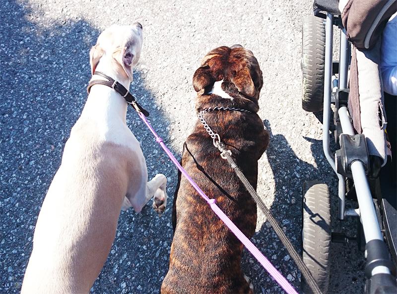 hvordan er det å ha barn og hund sammen